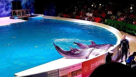 Light and Laser Show in Dubai Dolphinarium