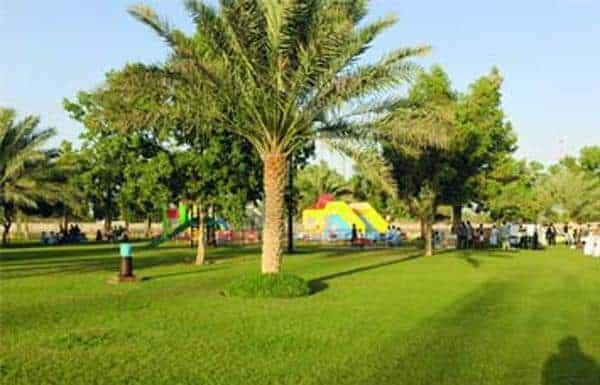 Al Khalidiyah Park Palm Tree