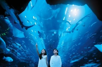The fascinating Dubai Aquarium