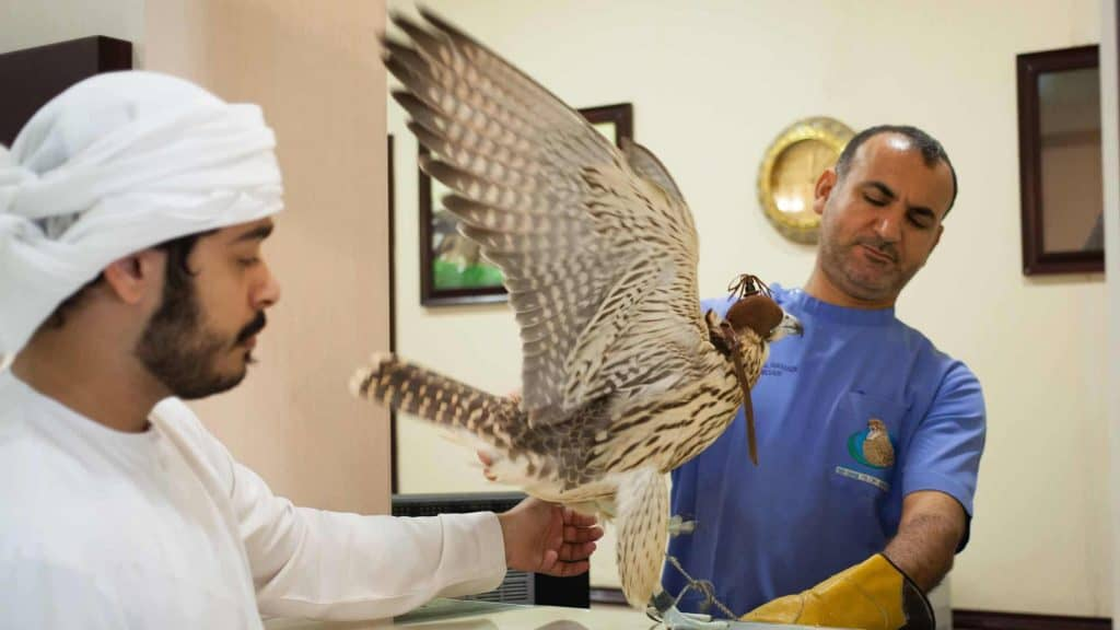 Doctors and Technicians Attending a Falcon
